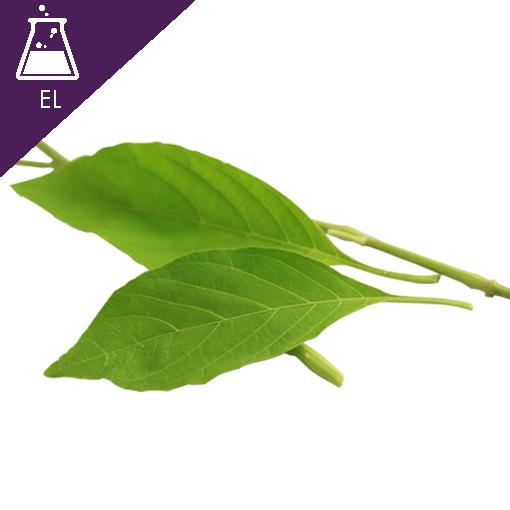 Rhinacanthus Extract Liquid